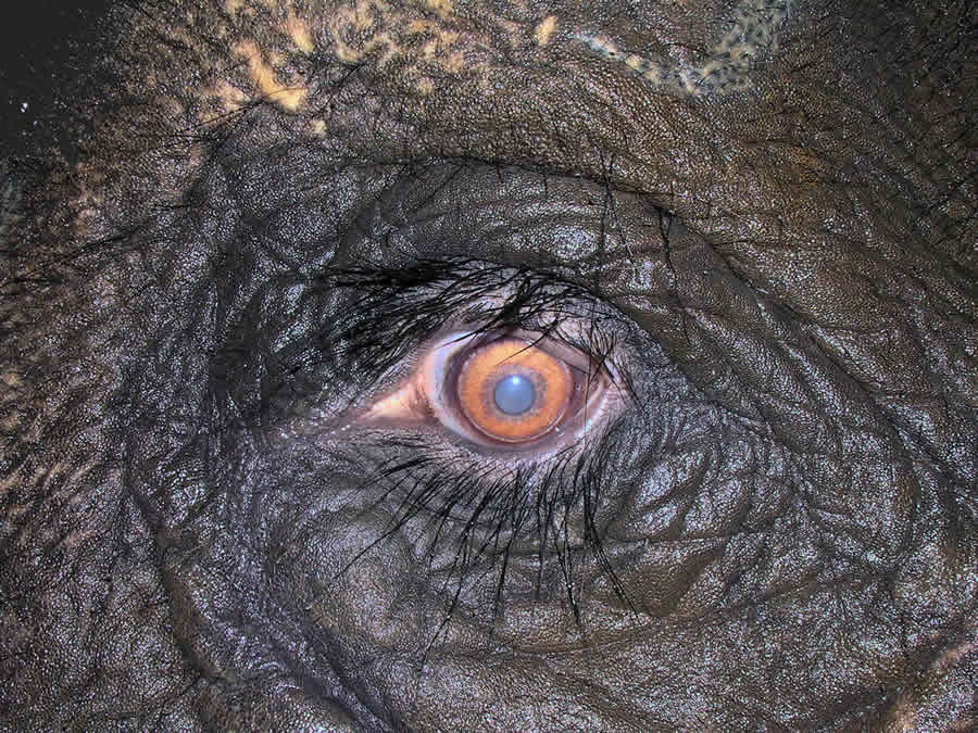 ojo de un elefante