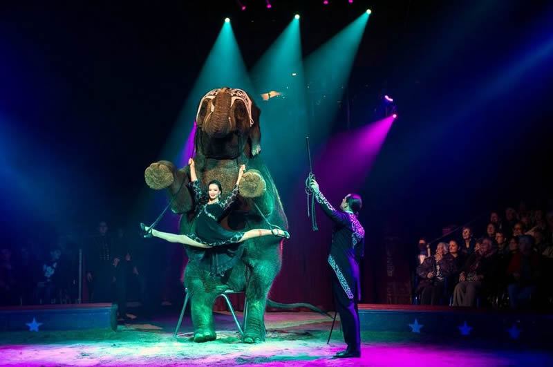 circo en 2015 año