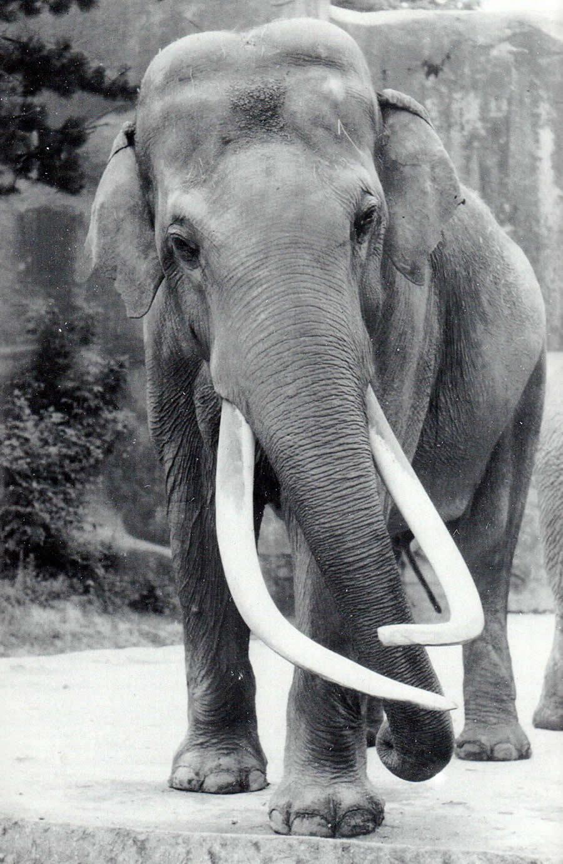Siam-Parc-Zoologique-de-Paris