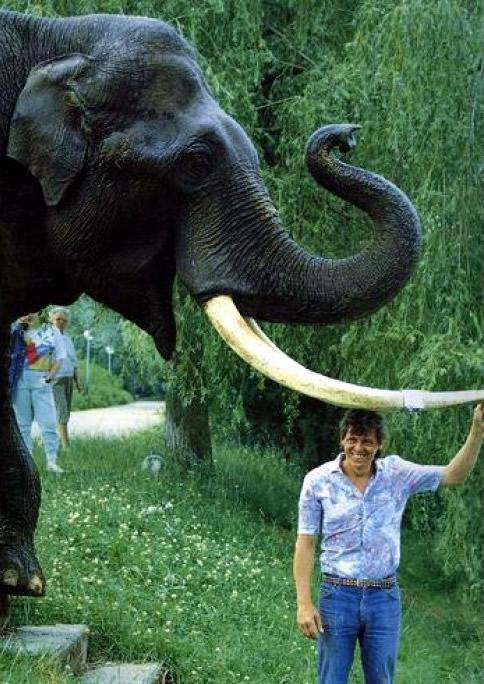 elefante macho Schenka