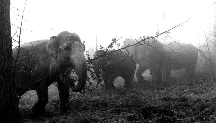 """Libres"" entre la neblina del bosque"